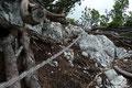 … kurze Drahtseilpassagen versteckten sich regelrecht in diesem Gebüsch.