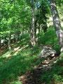 Nach der Gasselhütte ging es immer steiler werdend in Serpentinen den Berghang empor.