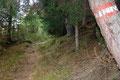 Leicht an Höhe gewinnend folgte ich dem gut ausgetretenen ÖAV-Wandersteig Nr. 676 bis zur Einmündung des aus Kalwang heraufziehenden 677er Steig, dem ich nun, ein viertes, fünftes und sechstes Mal die Schotterstraße querend bis …