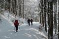 Zielstrebig setzten wir Schneeschuh vor Schneeschuh und bewegten uns weiter entlang der Waldstraße nach Norden, bis …