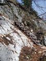 Diese kleine Holzleiter erleichterte uns den Aufstieg über eine ebenso kleine Felsstufe.