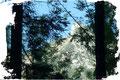 Immer wieder versuchte sich der markante Felsaufschwung des Rettenkogels zwischen dem Geäst der Bäume in den Vordergrund zu zwängen.