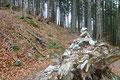 Von nun an schlängelte sich der Steig in langgezogenen Kehren den Waldhang hinauf. Unzählige Steinmännchen machten ein Verlaufen in diesem Abschnitt praktisch unmöglich.