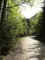 Ich beschloss an dieser Stelle die Forststraße zu nehmen da ich auf dem Rückweg über den Wanderweg marschieren wollte.