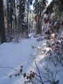Vereinzelt drangen die Sonnenstrahlen durch den Wald, wir genossen sie und wanderten auf demselben Weg zurück ins Tal.