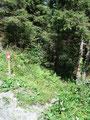 """Zum Glück war der """"Straßenhatscha"""" nur von kurzer Dauer und mein Weg führte mich wiederum in den Wald hinein."""