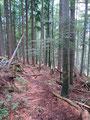 Bevor ich wieder in den Wald eintauchte, legte ich nochmals eine kurze Trinkpause ein.  Anschließend eilte ich den Waldsteig weiter talwärts.