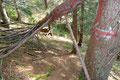 … es wiederum die langgezogenen Serpentinen durch den Wald talwärts ging. Ein kurzer Moment der Unachtsamkeit und schon war es passiert – ich rutschte auf einer Wurzel aus! Sofort sprang ich wieder auf – nichts passiert!