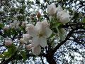 Auf den letzten Metern zurück zum Ausgangspunkt ... eine Blütenpracht ...