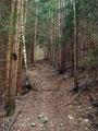 """Nachdem ich meine kurze """"Fotosession"""" abgeschlossen hatte, führte mich der Wegverlauf in den Wald hinein."""