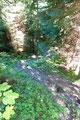 Er schlängelte sich weiter und weiter bergab. Mal über kleinere Felspassagen, dann wieder gut ausgetreten wie hier zu erkennen ist.