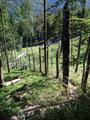 Zwichen zwei Wildgehegen führte uns der Wandersteig hinab zum Gasthof Kleefeld.