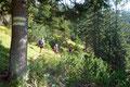 """… die """"weiß-gelb-weißen"""" Markierungen leiteten uns flotten Schrittes in einem leichten auf und ab entlang des Pfades zur Abzweigung Weg Nr. 01, wo sich die Gipfelrunde über der Kientalerhütte schloss."""