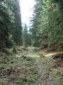 Die Gasse rasant aber vorsichtig (Rutschgefahr!) hinunter zur Halbweghütte (1117m).