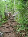 In Serpentinien führte uns der Weg weiter moderat durch den Wald empor.
