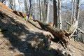 Wie so oft bei unseren Ausflügen in die heimische Bergwelt hatte auch hier der Sturm ganze Arbeit geleistet. Wo man hinschaute gab es umgestürzte Bäume zu begutachten.