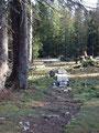 … wieder durch den Wald, …