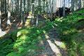 Gemütlich wanderte ich dem mäßig ansteigenden Waldpfad unter dem grünen Blätterdach Richtung Kaltherbergalm empor.