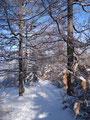 Wir verharrten aber nur kurz und tauchten sofort wieder in den Wald ein.