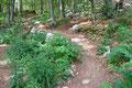 Nun schlängelte sich die anspruchslose Route weiter bergwärts. Es war nichts Besonderes, nur Buchenwald mit ein paar kleineren Felsstufen, wie sie auch in unseren höher gelegenen Wäldern vorkommt.