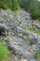 … über einige Felsstufen ins Latschengebüsch hinein.