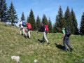 """Das """"Lustige Wanderquintett"""" bei seiner Lieblingsbeschäftigung, dem Gipfelsturm. Schweißtreibende Angelegenheit, den das anfangs flache Gelände steilte jetzt sehr rasch an."""