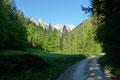 … verfolgten die unmerklich ansteigende Forststraße weiter talein. Charakterisierend für diese Jahreszeit präsentierte sich die Landschaft in allen nur möglichen Grüntönen.