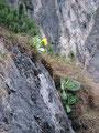 … überall findet man diese edle Blume in den Ritzen der Steilwände.