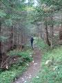 Hindurch durch Wiesen und Wälder, immer den Weg 601 entlang, ...