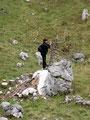Endlich wurde auch die Sarsteinhütte erreicht. Wo aber war Lissi hingekommen? Ein kleiner Felsblock wurde von ihr erstürmt. Wollte sie noch einen zweiten Gipfelsieg? Nein, sie wollte nur  die Sarsteinhütte ins richtige Licht zu rücken.