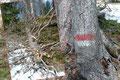 Hier wird einem ein Einblick in eine bizarre Welt geboten. Überall standen tote Bäume. Teilweise entrindet, um dem Borkenkäfer keinen Unterschlupf zu bieten. Das Holz darf einfach verrotten. Eine Markierung!!!