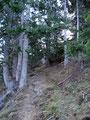 Durch ein kleines Waldstück, über Wurzeln marschierten wir weiter Richtung Retteneggalm.