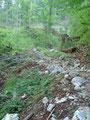 Vorbei an dem Holzstoß führte der Steig Nr. 221 relativ flach ...