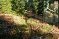 Nach einem kräftig ansteigenden und fast geradlinigen Steilstück wurden die Bäume nunmehr lichter und auch die Sonnenstrahlen konnten das Dach des Waldes durchbrechen. So machte das Wandern gleich viel mehr Spaß!