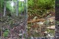 … stiegen gerade aus weiter, entlang einer Rinne durch den Wald höher. Vereinzelt traf man auf verfallene stufenähnliche Erhebungen, welche auf einen aufgelassenen Steig schließen ließen.