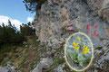 Und zwischendurch begeisterte entlang des Steiges immer wieder die Flora mit ihrer Blütenpracht.