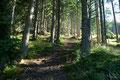 … schon führte der teils breite Pfad erneut durch den Schatten spendenden Wald höher.