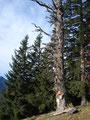 ... der an diesem märchenhaft wirkenden Baum angebracht war ...