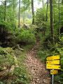 Auf einem breiten Waldweg ging es nun weiter empor, bis ich …