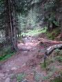 Geradewegs tauchte ich in den Wald ein, …