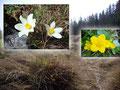 Dabei blieben diese wunderschönen Blumen natürlich nicht unbemerkt von mir.