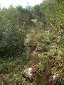 """… der Steig steilte wiederum an. In weiten Serpentinen führte uns der """"gatschige Gemüsesteig"""", wie Roni es nannte den Hang empor."""