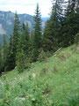 Nasse Grashänge querend, führte mich die gleiche Route talwärts.