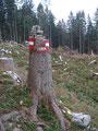 Durch den Windwurf gefällte Bäume wurden sinnvoll als Wegmarkierung genutzt.