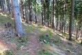 … nun steiler abfallenden Steig durch den Wald weiter talwärts.