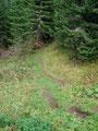 … erneut schnurstracks  in das Gehölz des Waldes hinein.