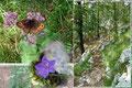 Nachdem ich kurz die Tafeln begutachtet hatte folgte ich dem Waldpfad weiter und konnte nunmehr die Flora am Wegesrand in Natura bestaunen. Schmetterlinge flatterten von einer Blüte zur Anderen.