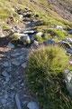 Mit leichtem Gepäck am Rücken stiegen Gabi, Maria, Susi und ich, den direkt neben der Hütte abzweigenden und bestens markierten Steig in Serpentinen …