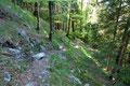 … über weite Serpentinen durch den wunderschönen Mischwald auf.