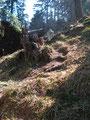 … den steilen aber unschwierigen Waldhang  Richtung Gipfel empor.